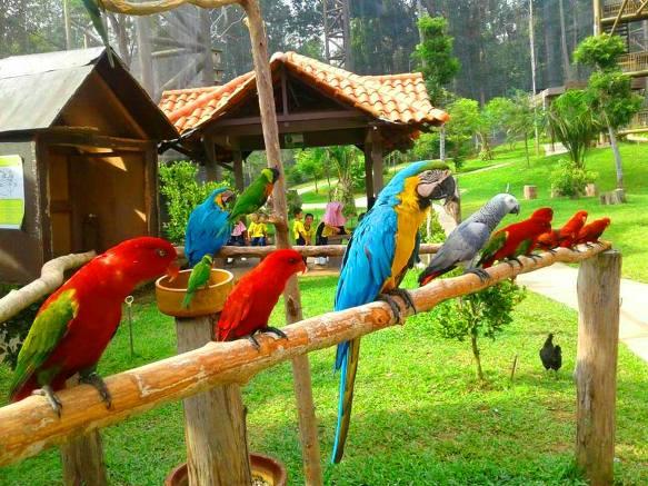 Tempat-Menarik-Di-Melaka-Taman-Burung-Melaka