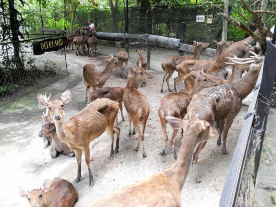 Tempat-Menarik-di-Pahang-Deerland-Park
