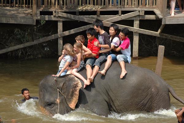 Tempat-Menarik-di-Pahang-Santuari-Gajah-Kuala-Gandah