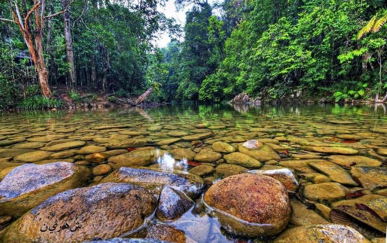 Tempat-Menarik-di-Pahang-Taman-Negara-Endau-Rompin
