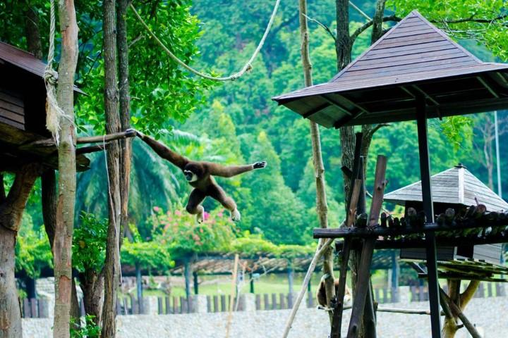 Tempat-Menarik-di-Pahang-Zoo-Mini-Teruntum