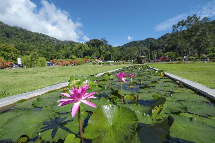 Tempat-Menarik-di-Penang-Taman-Botani-Penang