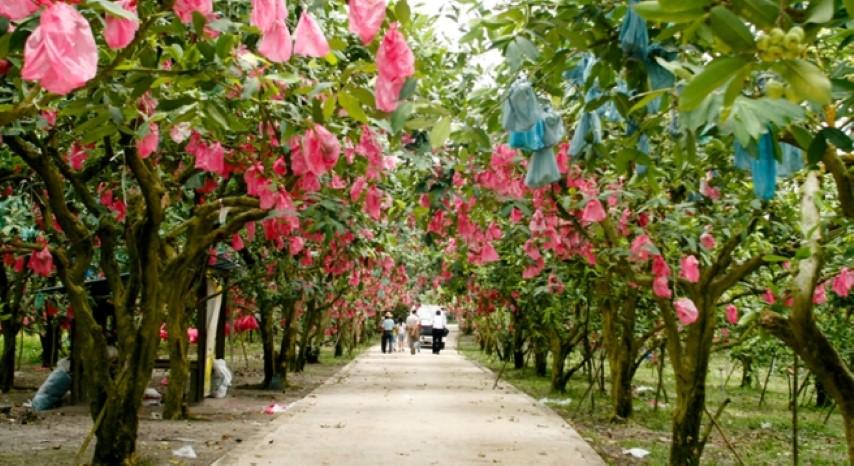 Tempat-Menarik-Di-Johor-Desaru-Fruit-Farm