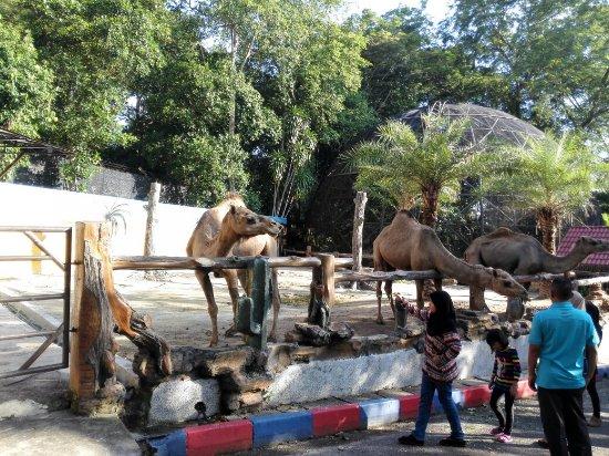 Tempat-Menarik-Di-Johor-Zao-Johor