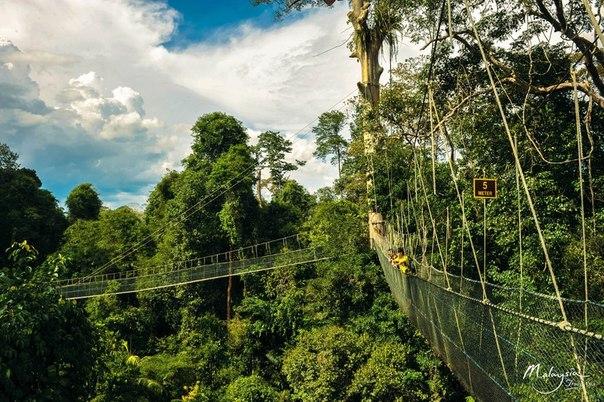 Tempat-Menarik-Di-Kelantan-Taman-Negara-Kuala-Koh
