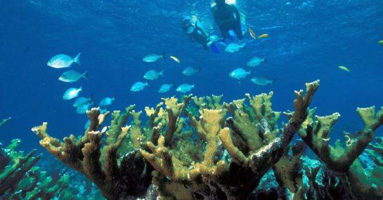 Tempat-Menarik-Di-Pulau-Sibu-Diving