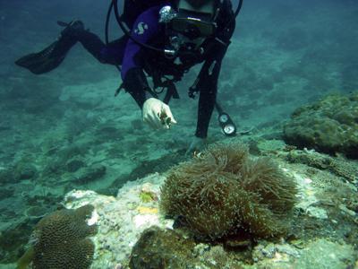 Tempat-Menarik-Di-Pulau-Sibu-Snorkeling-2