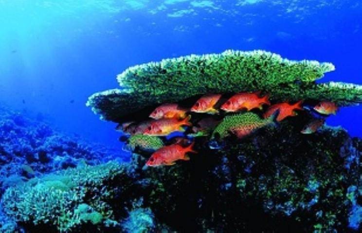 Tempat-Menarik-Di-Pulau-Sibu-karang