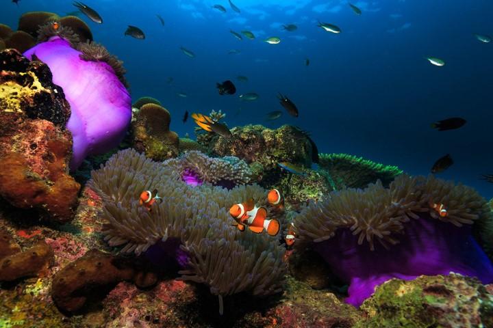 Tempat-Menarik-di-Pulau-Tioman-19