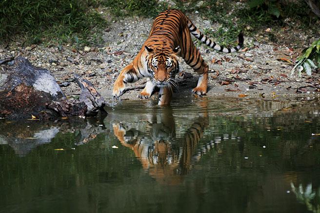 Tempat-Menarik-di-Perak-Zoo-Taiping