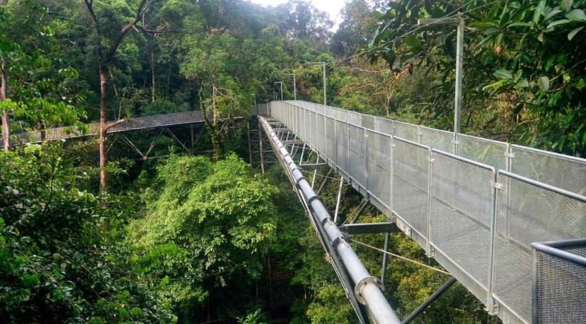 Tempat-Menarik-di-Kedah-Tree-Top-Walk-Sungai-Sedim