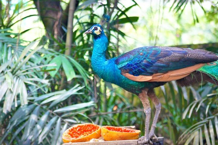 Tempat-Menarik-Di-Kuala-Lumpur-Taman-Burung-Kuala-Lumpur