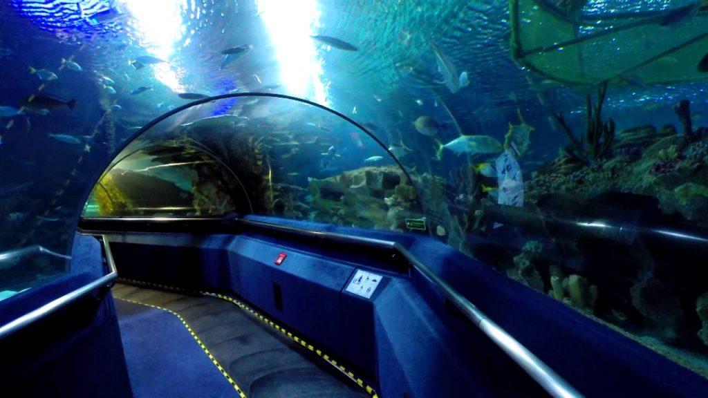 Tempat-Menarik-Di-Kuala-Lumpur-Aquaria-KLCC
