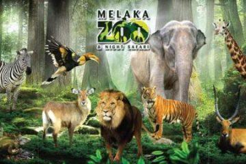 Zoo-Melaka-Night-Safari-1