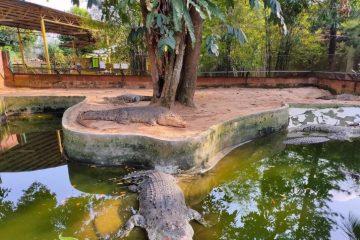 Taman-Buaya-Rekreasi-Melaka-11-1